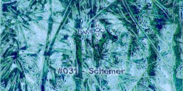 BS031 - Schemer (Positive Education) - 17.07.2019