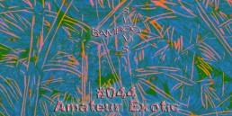 BS044 - Amateur Exotic